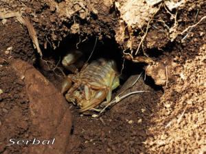 Escorpion-web2