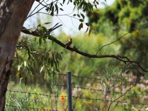 Torcecuellos-nido-web
