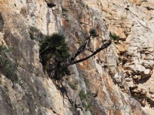 palmito-El-chorro-2016-web
